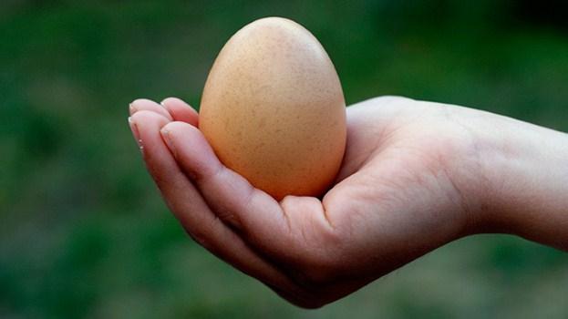 The-Incredible-Edible-Egg