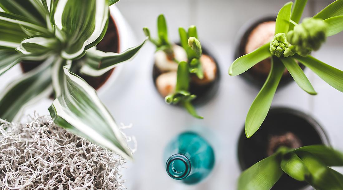 نقش گیاهان خانگی در بهبود سلامت